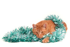 Cat is playing with Christmas decorations Stock Photos