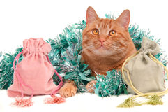 Cat playing with Christmas decorations Stock Photos