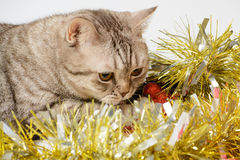 Cat playing with Christmas decorations Stock Photo