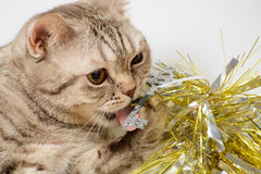 Cat playing with Christmas decorations Royalty Free Stock Image