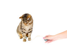 Cat playing Stock Photography
