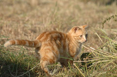 Cat playing on the farm Stock Image