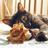 Cat playing with flower Stock Photography
