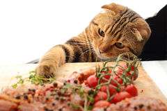 Cat playing with food. In the kitchen royalty free stock images