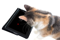 The cat is playing a game on the tablet Royalty Free Stock Photography