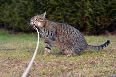 Cat playing on the garden Royalty Free Stock Photography
