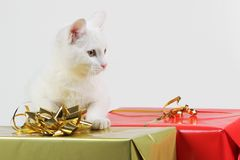 Cat playing with gift box Stock Image