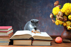 Cat playing with glasses Royalty Free Stock Photography