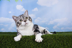 Cat playing on grass serene day Stock Images
