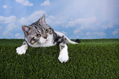 Cat playing on grass serene day Stock Image