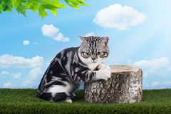 Cat playing on grass serene day Royalty Free Stock Photography