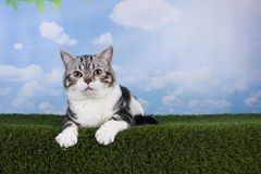 Cat playing on grass serene day Royalty Free Stock Photos