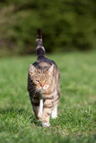 Cat playing on the grass Stock Images