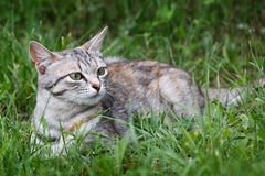 cat playing in green grass at park. Stock Photography