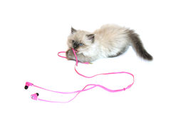 Cat playing with headphones royalty free stock image