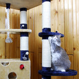 Cat playing in a huge cat-house. Gray cat playing in a huge cat-house Stock Photos
