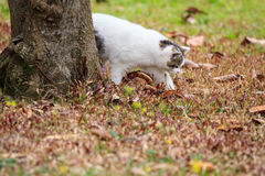 Cat. The cat playing on the lawn Stock Photo