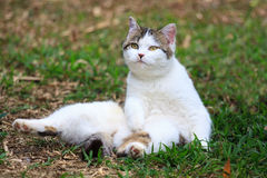 Cat. The cat playing on the lawn Stock Image