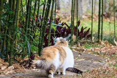 Cat. The cat playing on the lawn Stock Images