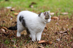 Cat. The cat playing on the lawn Stock Photography