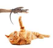 Cat playing with lizards Stock Photography
