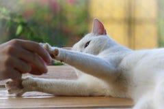 Cat Playing mit Mann lizenzfreies stockfoto