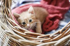 Cat playing at my clothes. This adorable baby was having such a great time on my clothes, I couldn`t resist Stock Photography