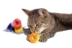 Cat playing with party decoration. Isolated on white Royalty Free Stock Image