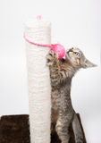 Cat playing with a pink ball Royalty Free Stock Photography