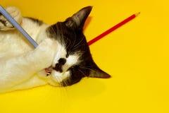 Cat Playing preta com lápis Foto de Stock Royalty Free