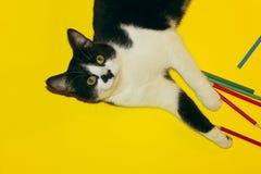Cat Playing preta com lápis Cat Over Yellow Background preta Imagem de Stock Royalty Free