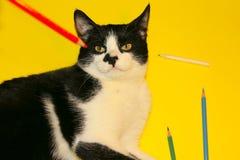 Cat Playing preta com lápis Cat Over Yellow Background preta Imagens de Stock Royalty Free
