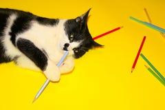 Cat Playing preta com lápis Cat Over Yellow Background preta Fotografia de Stock Royalty Free
