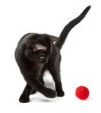 Cat playing with red clew Royalty Free Stock Image