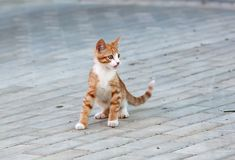 Cat playing on a road Royalty Free Stock Photography