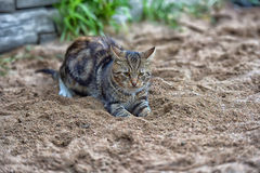 Cat playing in the sand Stock Image