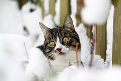 Cat playing in the snow Royalty Free Stock Photos