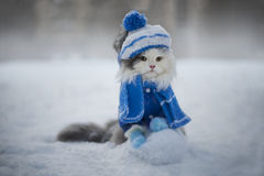 Cat playing in the snow frosty day Royalty Free Stock Photo