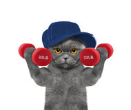 Cat playing sports with dumbbells Stock Photos
