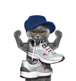 Cat playing sports -- running and jogging Stock Image