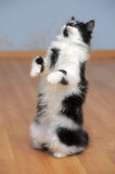 Cat playing while standing on its hind legs, catches Stock Images