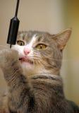 Cat playing Stock Photo
