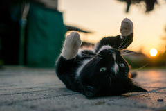 Cat playing with the sun. A wonderful cat is playing while the sun is setting in the background Stock Photo