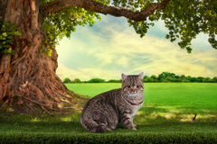 Cat playing on a sunny summer day under a tree Stock Photos