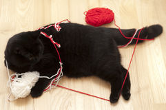 Cat Playing with Threads Stock Photography
