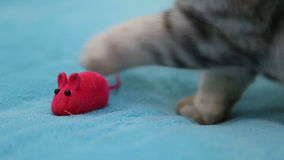 Cat playing with toy mouse stock footage