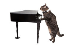 Cat Playing Toy Piano Stock Images