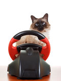 Cat playing a video game console, isolated on. Nice Cat playing a video game console steering wheel with deadpan expression on his face fluffy, isolated on white Stock Image