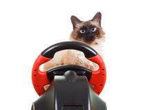Cat playing a video game console, isolated on white. Cute Cat playing a video game console steering wheel with deadpan expression on his face fluffy, isolated on Stock Photography