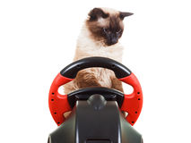Cat playing a video game console, isolated on white. Cat playing a video game console steering wheel with deadpan expression on his face fluffy, isolated on Royalty Free Stock Images